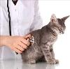 Ветеринарные клиники в Самойловке
